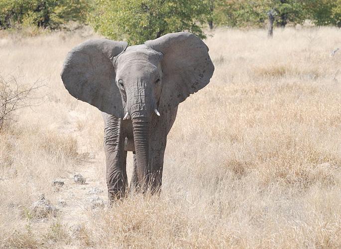 "Erma says, ""Took you long enough:"" The September 2021 (!) Elephant Coffee Klatch"